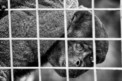 traffico illecito di animali