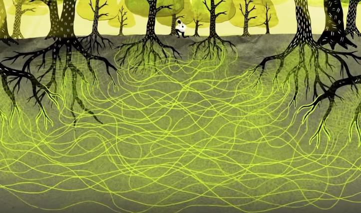 Wood wide web funghi micorrize