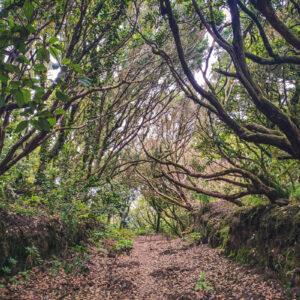 Parco-Angaga-lanima-verde-di-Tenerife